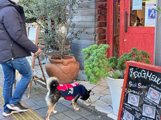 琥大朗 DOG DEPT + CAFE
