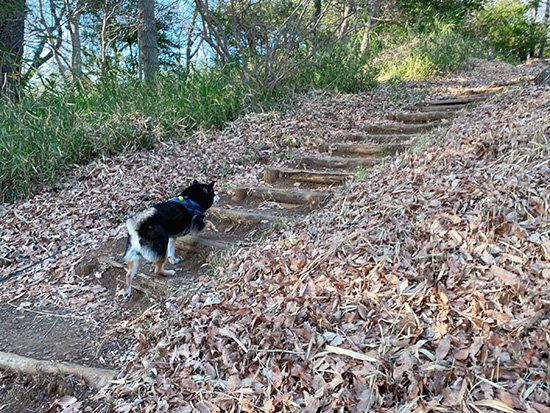 狭山公園を散歩する琥大朗