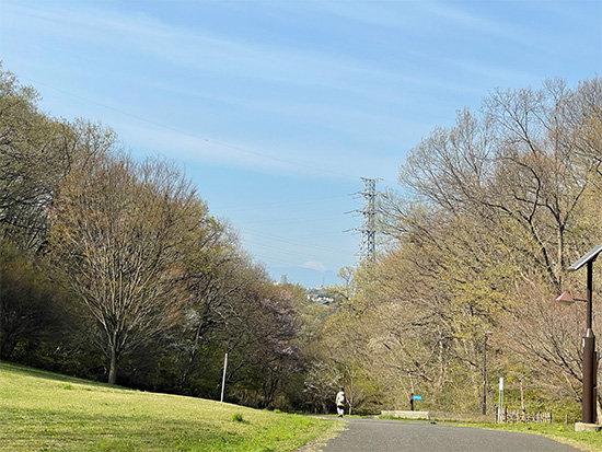 都立桜ヶ丘公園から見た富士山