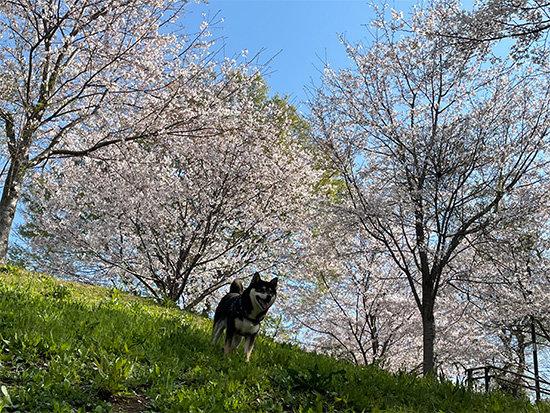 都立桜ヶ丘公園と琥大朗