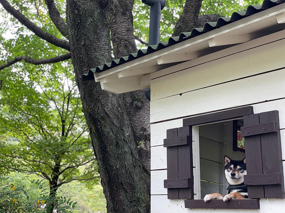 【東京都立川市】国営昭和記念公園を散歩♪あまりにも広すぎます!