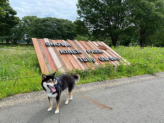 昭和記念公園のチューリップガーデン