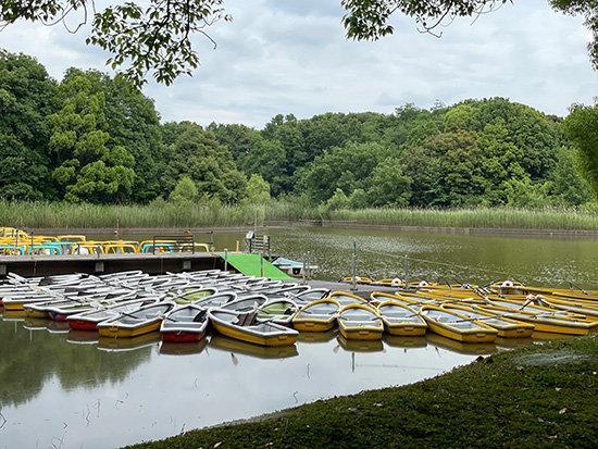 昭和記念公園の水鳥の池