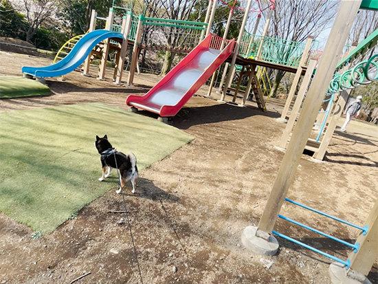 都立桜ヶ丘公園の遊具と琥大朗