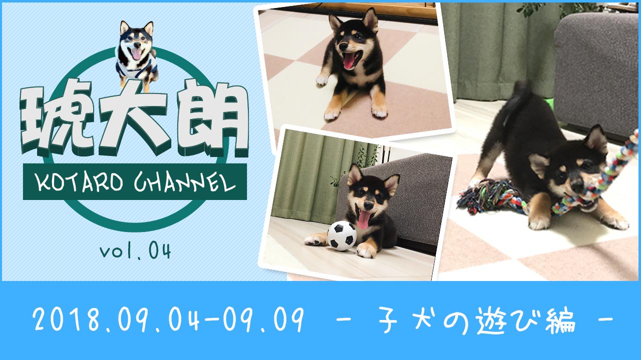 【YouTube】Vol.004 子犬の遊び編 - (0歳:生後70日~75日)